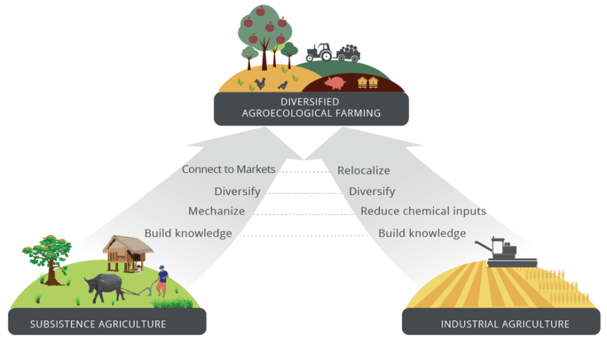 Figure 8: Convergence of industrial agriculture with subsistence agriculture (IPES-FOOD 2016)