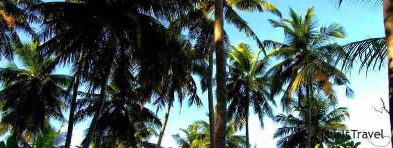 Palmeras en islas maldivas