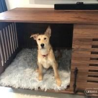 Canine_Credenza_2021-6