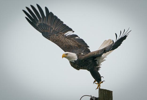 """Μια ιστορία για την αλαζονεία """"Ο αετός με τα χρυσά φτερά"""" – Thisisus.gr"""