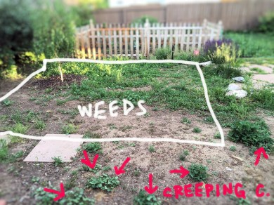 back area weeds