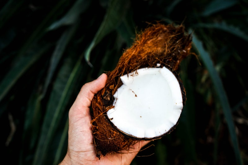 coconut open with coconut milk being held in a hand