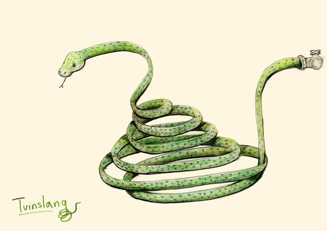 gardensnake