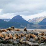 Isla de los lobos ushuaia argentina