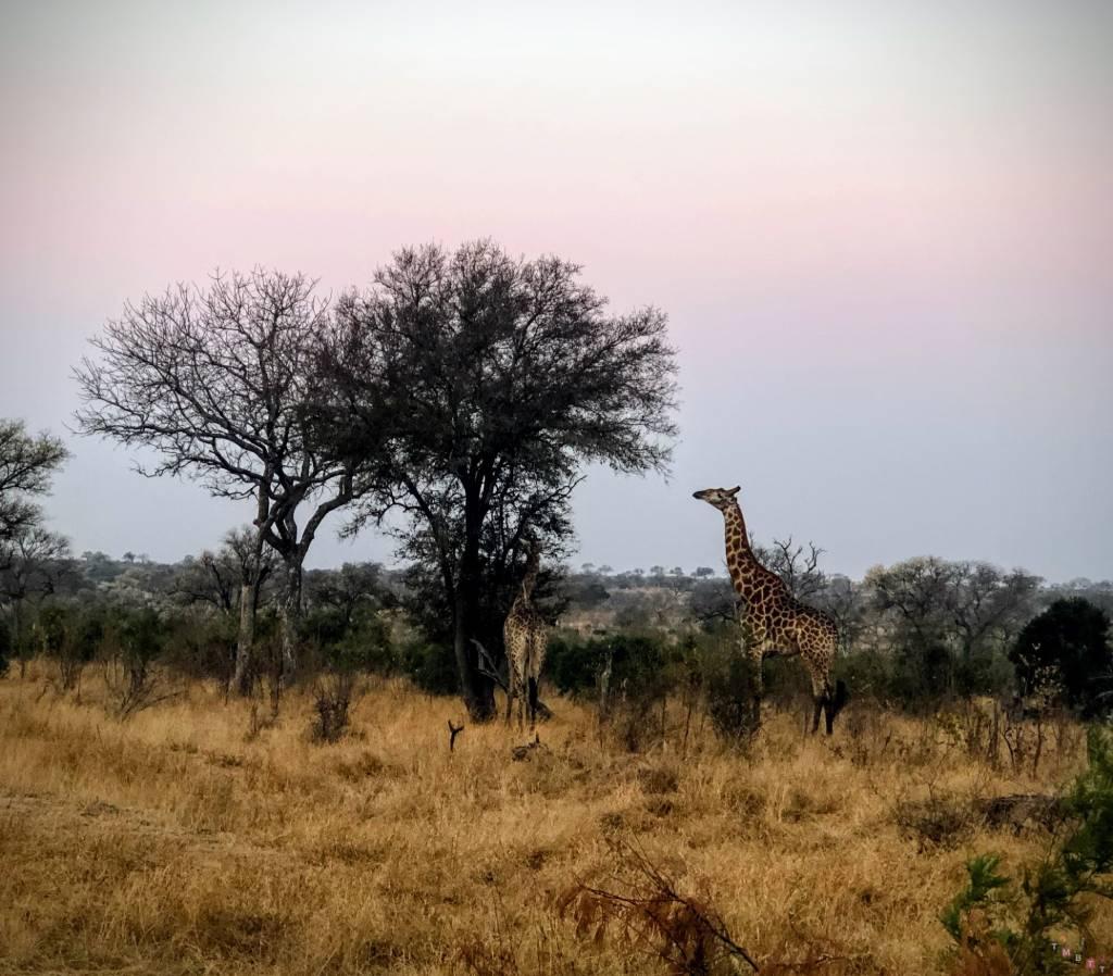 sudafrica cosa vedere