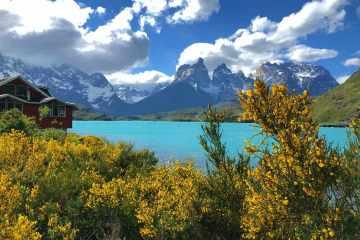 Vista lago pehoe e cuernos torres del paine con fiori