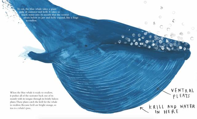 the-blue-whale-jenni-desmond-4