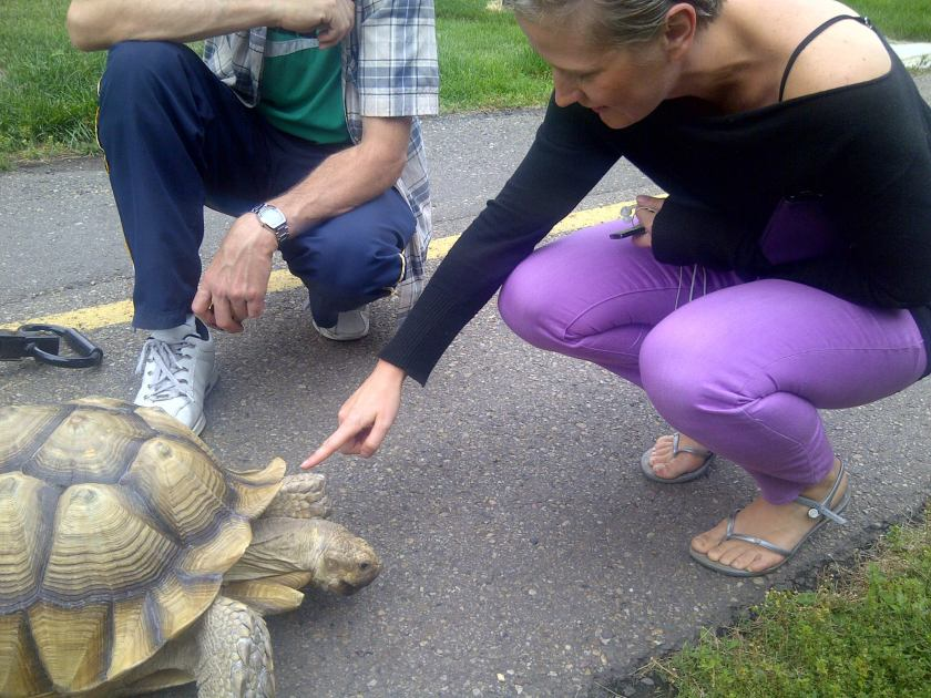 Oliver Turtle 1