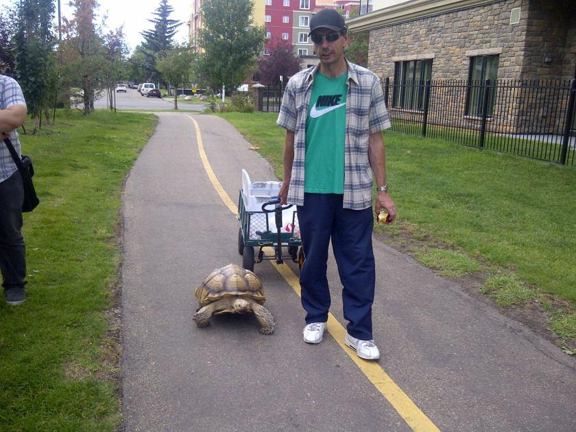 oliver turtle 2