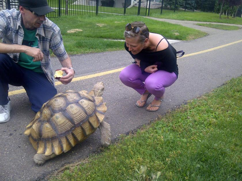 oliver turtle 3
