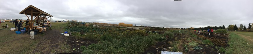 Green & Gold Community Garden
