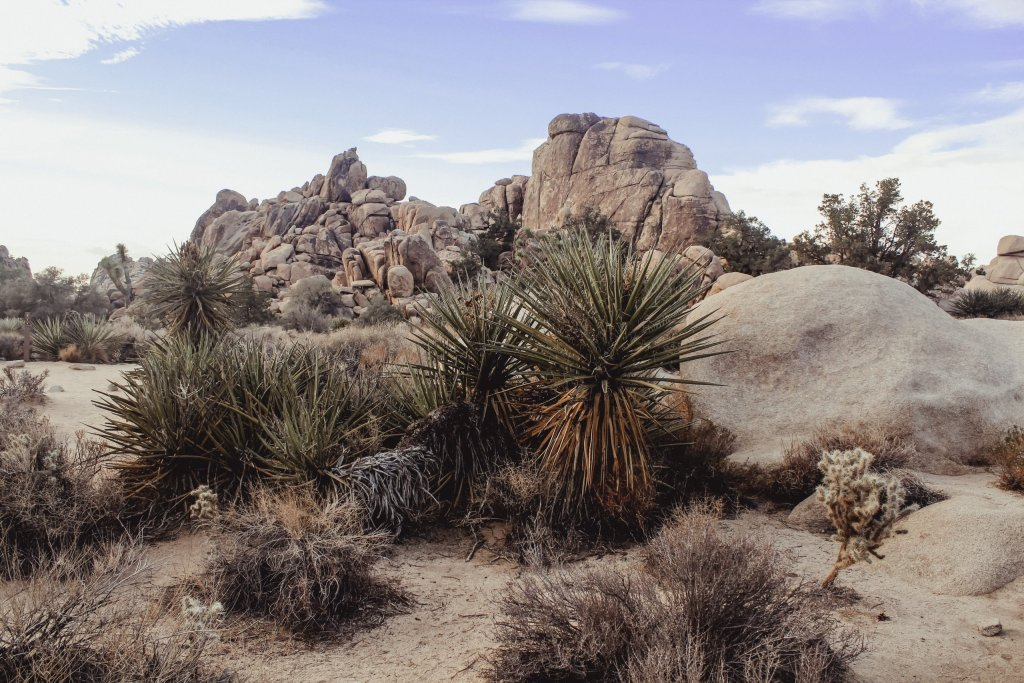 Plan ahead for desert safety when hiking!  Dry palms, rocks and dirt in Joshua Tree.