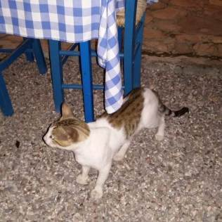 Cat in a restaurant