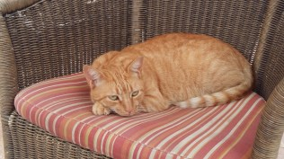 ginger-cat-hotel-elba-sara