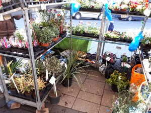 Moseley Farmers Market plant stall