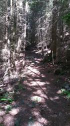 Gwydyr Forest Betws y Coed 5