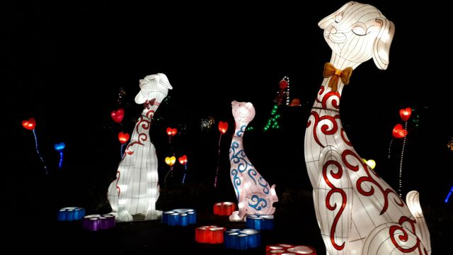Birmingham Magic Lantern Festival - large chinese style dogs