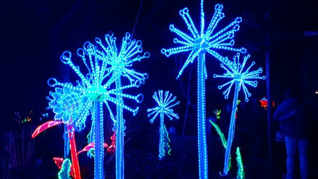 Birmingham Magic Lantern Festival - blue LED flowers
