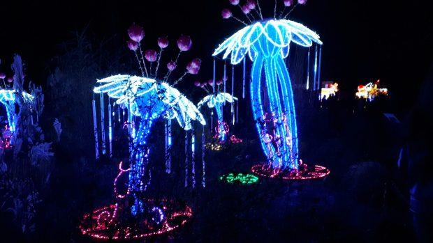Birmingham Magic Lantern Festival - blue and pink LED flowers