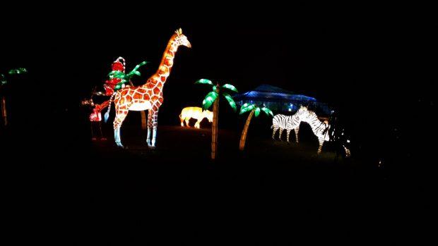 Birmingham Magic Lantern Festival - giraffes and zebra