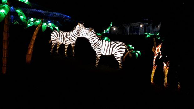Birmingham Magic Lantern Festival - zebra and palm trees