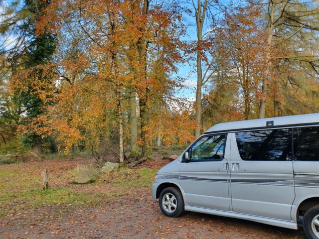 Autumn Winter Bongo in the Forest of Dean