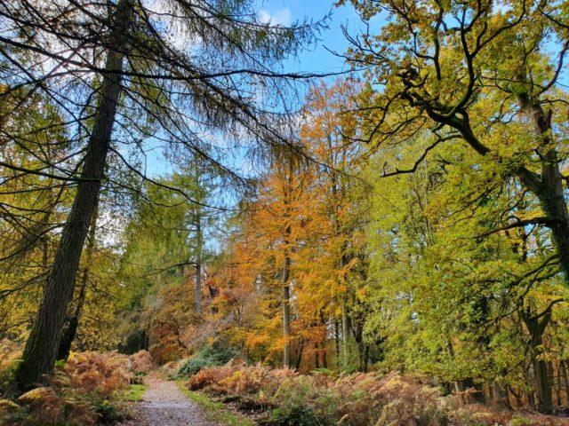 Autumn Winter Forest of Dean