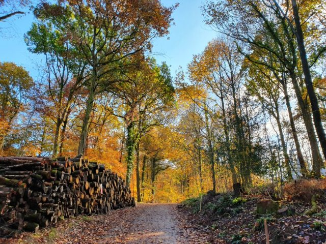 Autumn Winter Forest of Dean