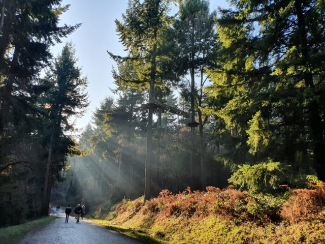 Autumn Winter Wyre Forest