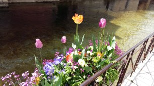 Flowers in Annecy