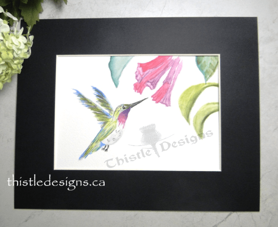 Hummingbird in Watercolour