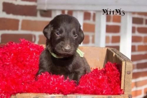 Mi1M3 Valentine #1