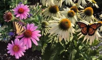 5 Benefits Of Starting A Flower Garden Thistle Downs Farm