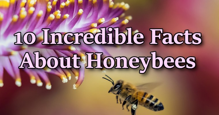 10 Incredible Quick Facts about Honeybees