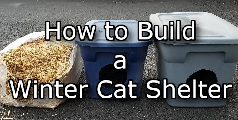 How To Build a Winter Cat Shelter in 5 Easy Steps