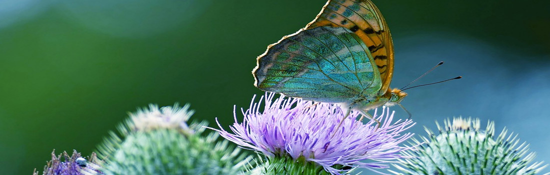 Thistle Green Hypnotherapy
