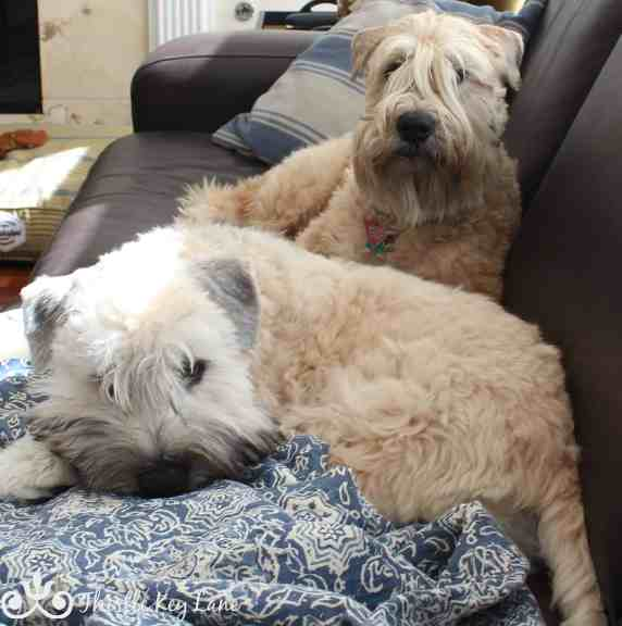 Sandy and Angus snuggling