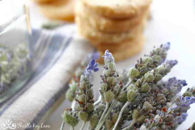 Dried Lavender Stems