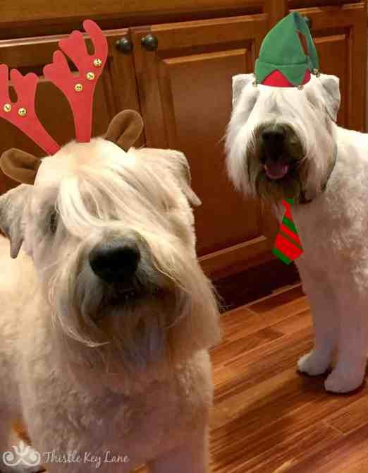 Sandy and Angus Christmas 2016