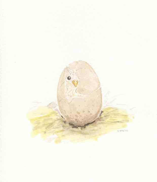 Hatching Chick Watercolor Free Printable