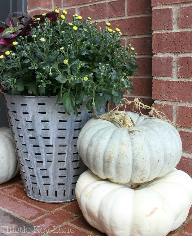 I love pumpkins and mums!