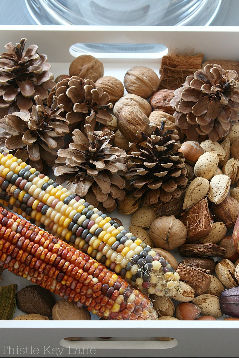 Beautiful brown tones of Indian corn, pinecones and unshelled nuts.