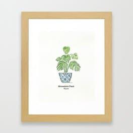 Monastera plant by Thistle Key Lane