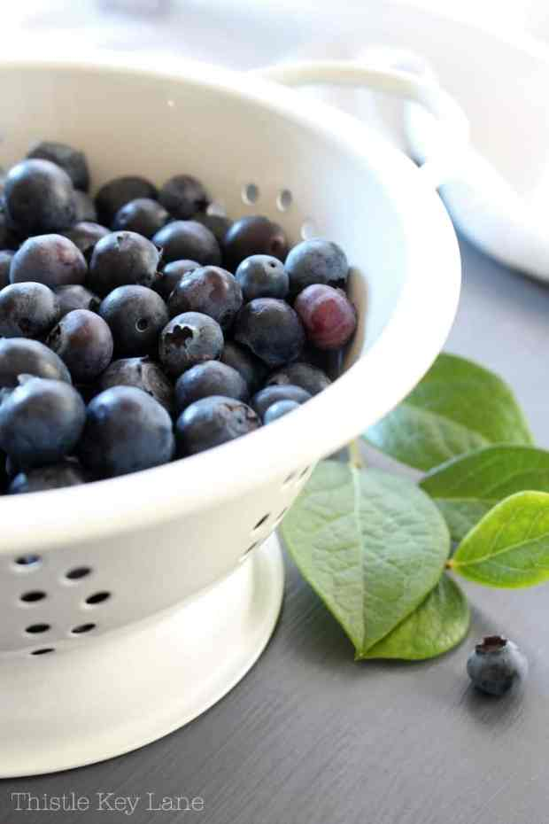 Fresh blueberries and green leaves in a white colander.