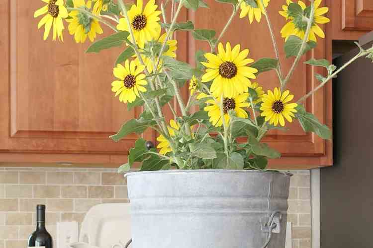 Adding fall color in the kitchen with sunflowers.