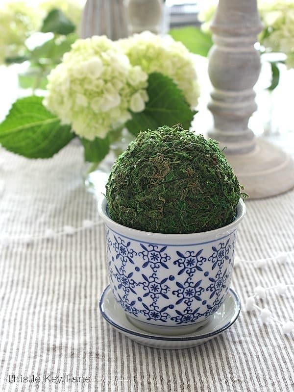 Mini topiary in blue and white ceramic planter.