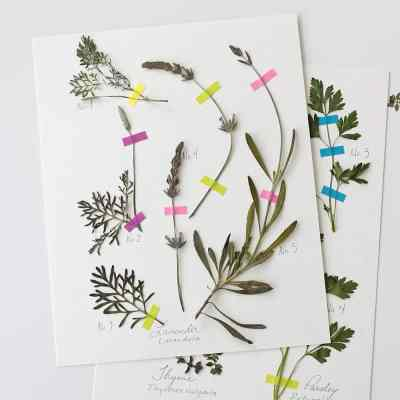 How To Make A Pressed Herb Collage