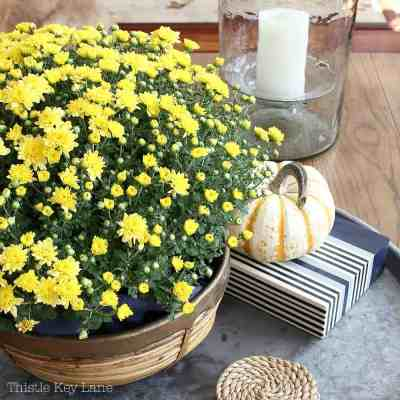 Fall Decorating With Mums And Pumpkins