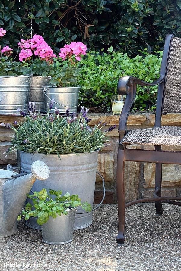 Simple Bucket Container Garden - Geraniums And Lavender.