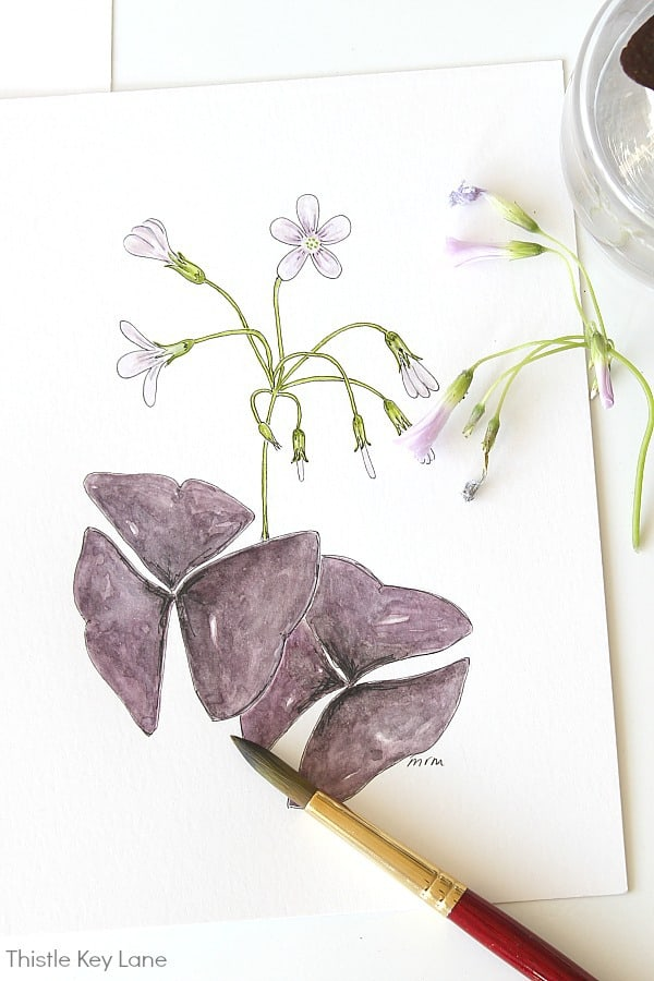 Simple Botanical Watercolor - Oxalis